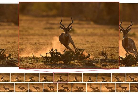 nikon_dslr_d500_10fps_200shots_wildlife-